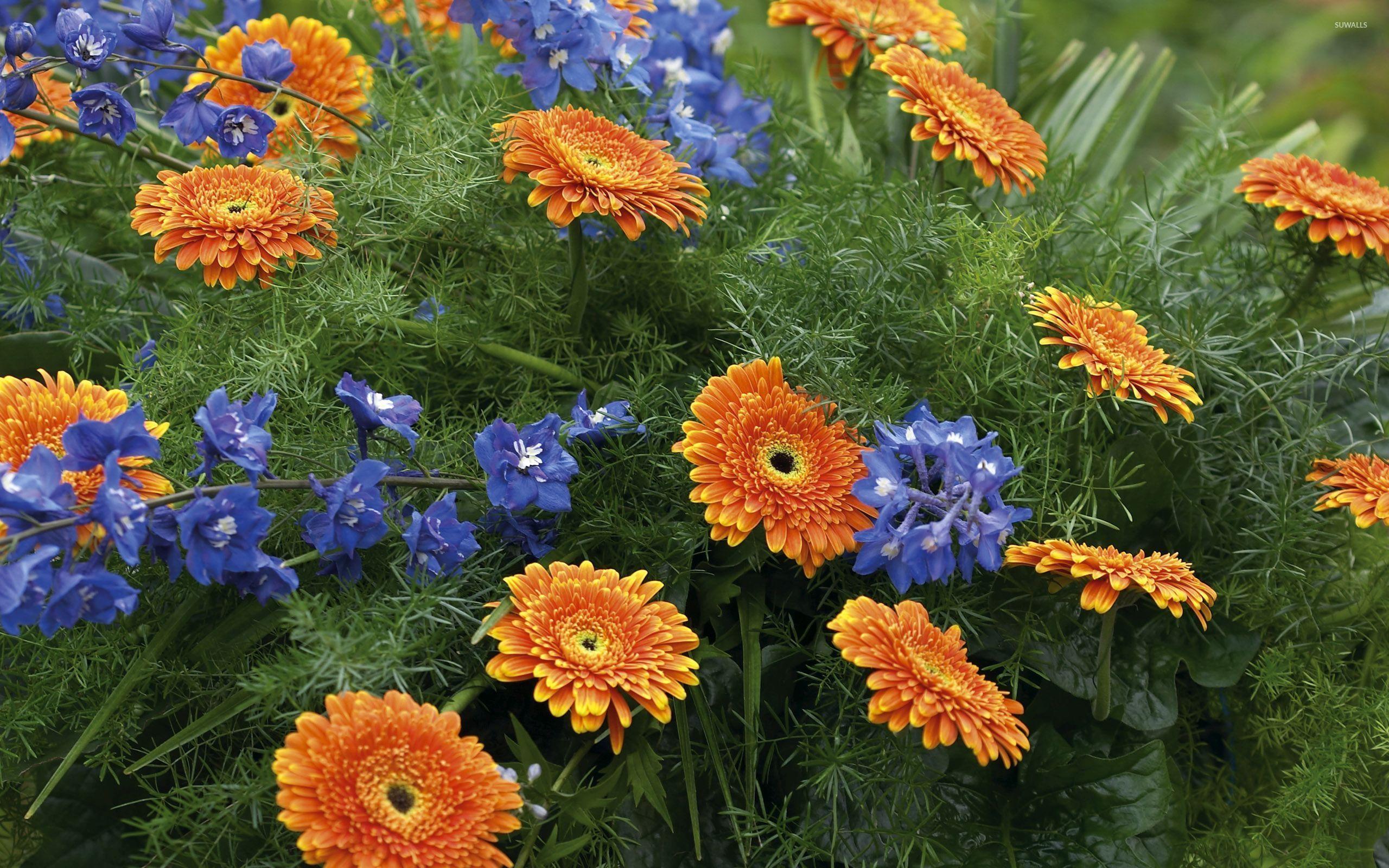 Orange And Blue Flower Background | www.imgkid.com - The ...