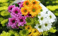 Chrysanthemum bouquet wallpaper 2560x1600 jpg