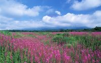 Clouds above the purple field wallpaper 1920x1200 jpg