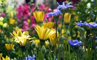 Colorful flowers wallpaper 1920x1200 jpg
