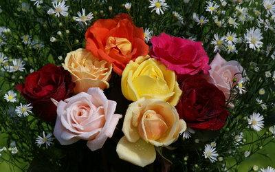 Colorful Rose Bouquet [2] wallpaper