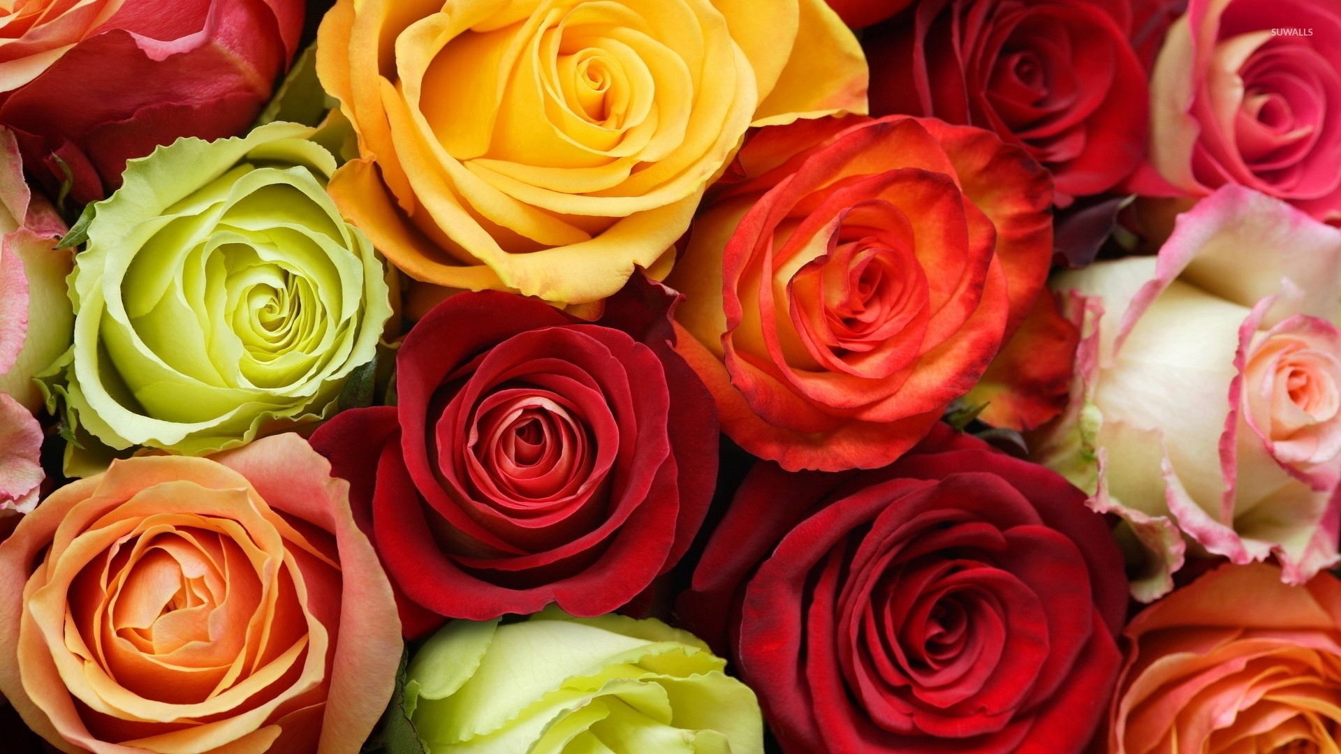 Colorful Roses Wallpaper
