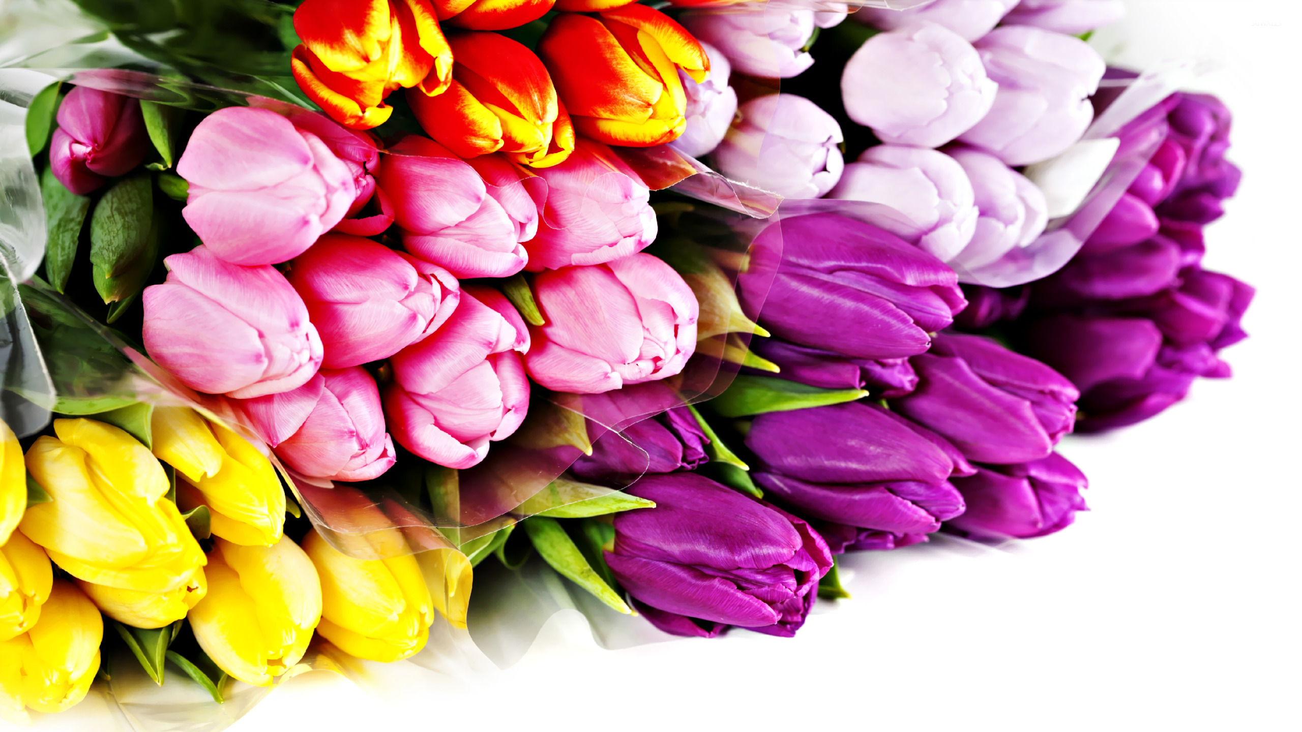 Colorful tulip bouquet wallpaper - Flower wallpapers - #18687