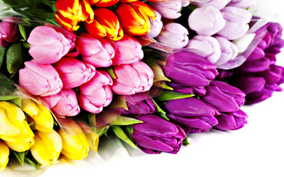 Colorful tulip bouquet wallpaper
