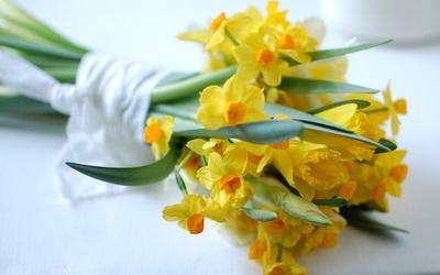 Daffodils [2] wallpaper