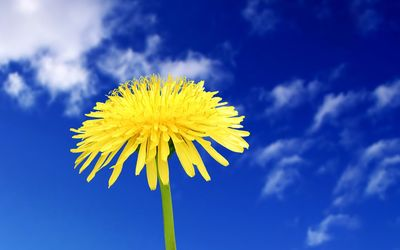 Dandelion in the sky wallpaper