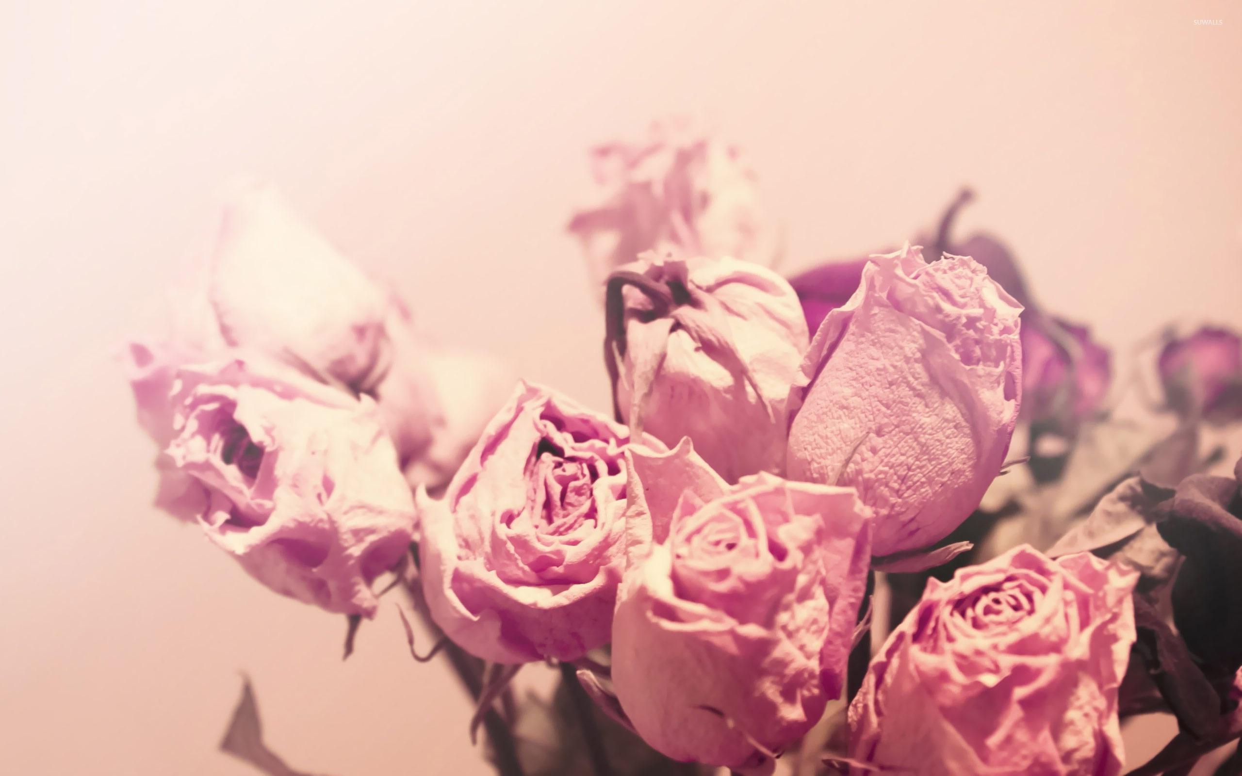 Dry Roses Wallpaper Flower Wallpapers 19375