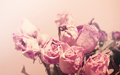Dry roses wallpaper