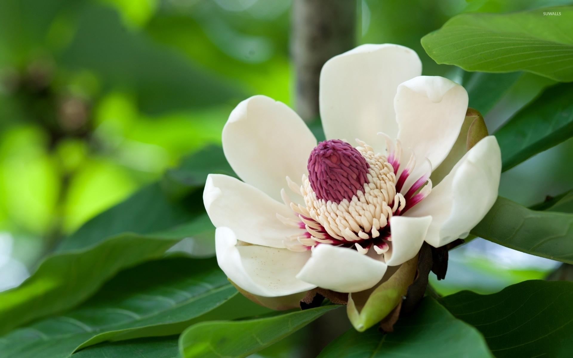 Exotic White Flower Wallpaper