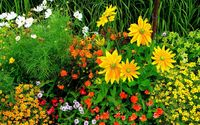 Flowers in the garden wallpaper 2560x1600 jpg