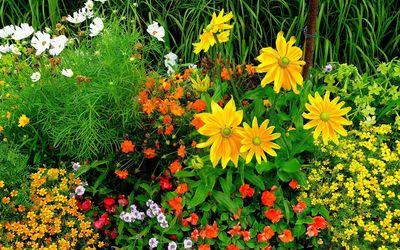 Flowers in the garden wallpaper