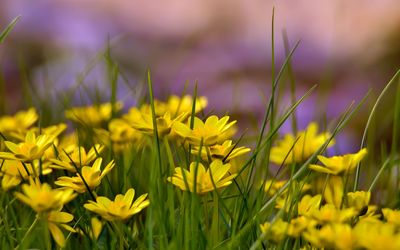 Flowers with yellow petals wallpaper