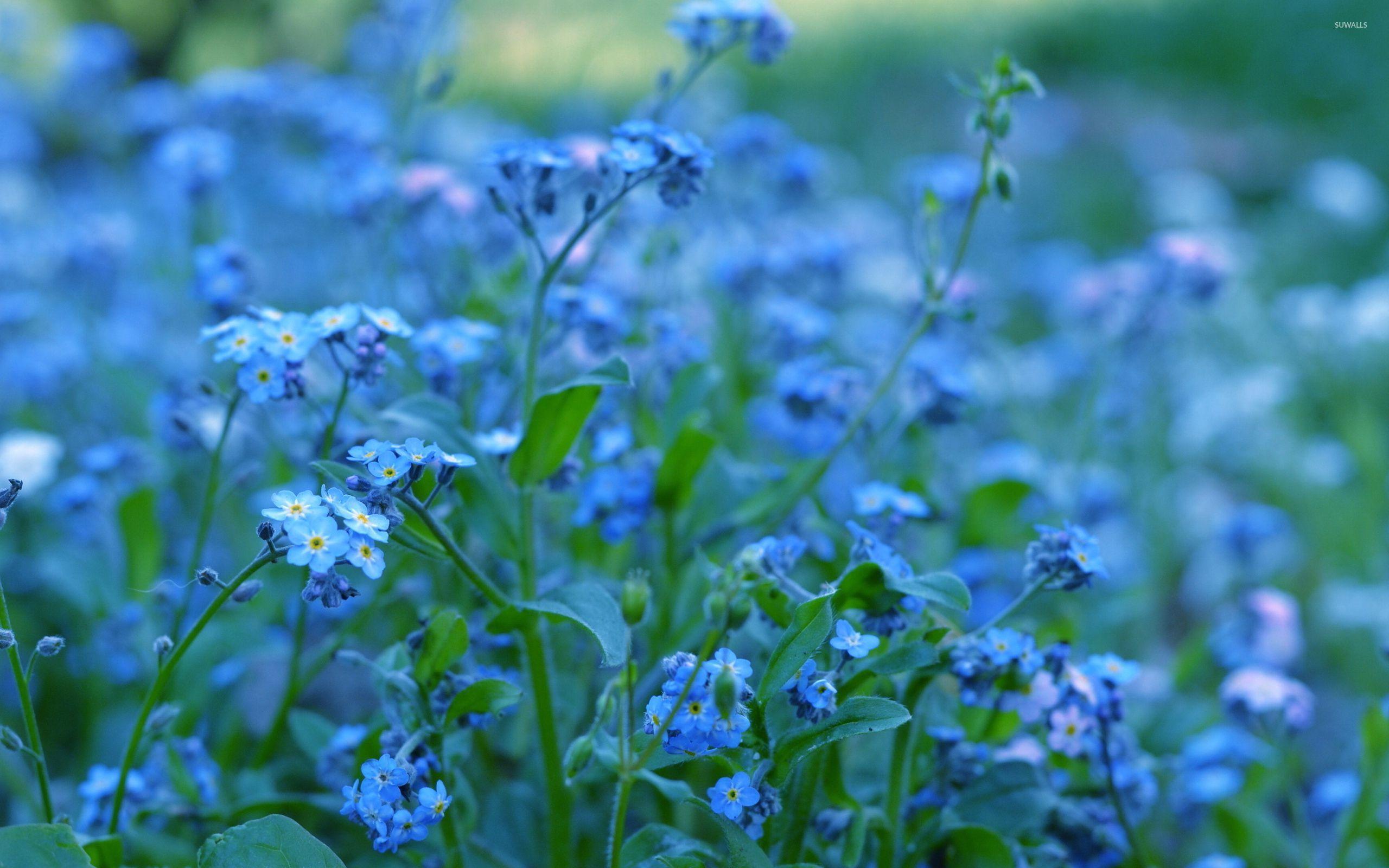 природа цветы синие трава бесплатно