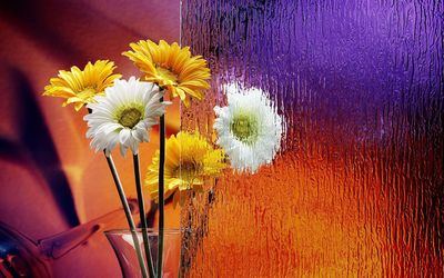 Gerberas in a vase wallpaper