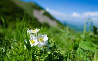 Immaculate white flowers wallpaper 3840x2160 jpg
