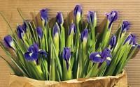 Irises wallpaper 1920x1200 jpg