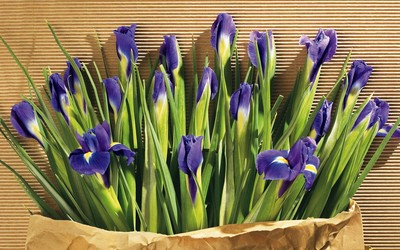 Irises wallpaper