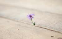 Knapweed peeking through the wooden pier wallpaper 3840x2160 jpg