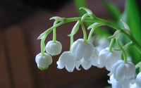 Lily of the valley [2] wallpaper 1920x1200 jpg