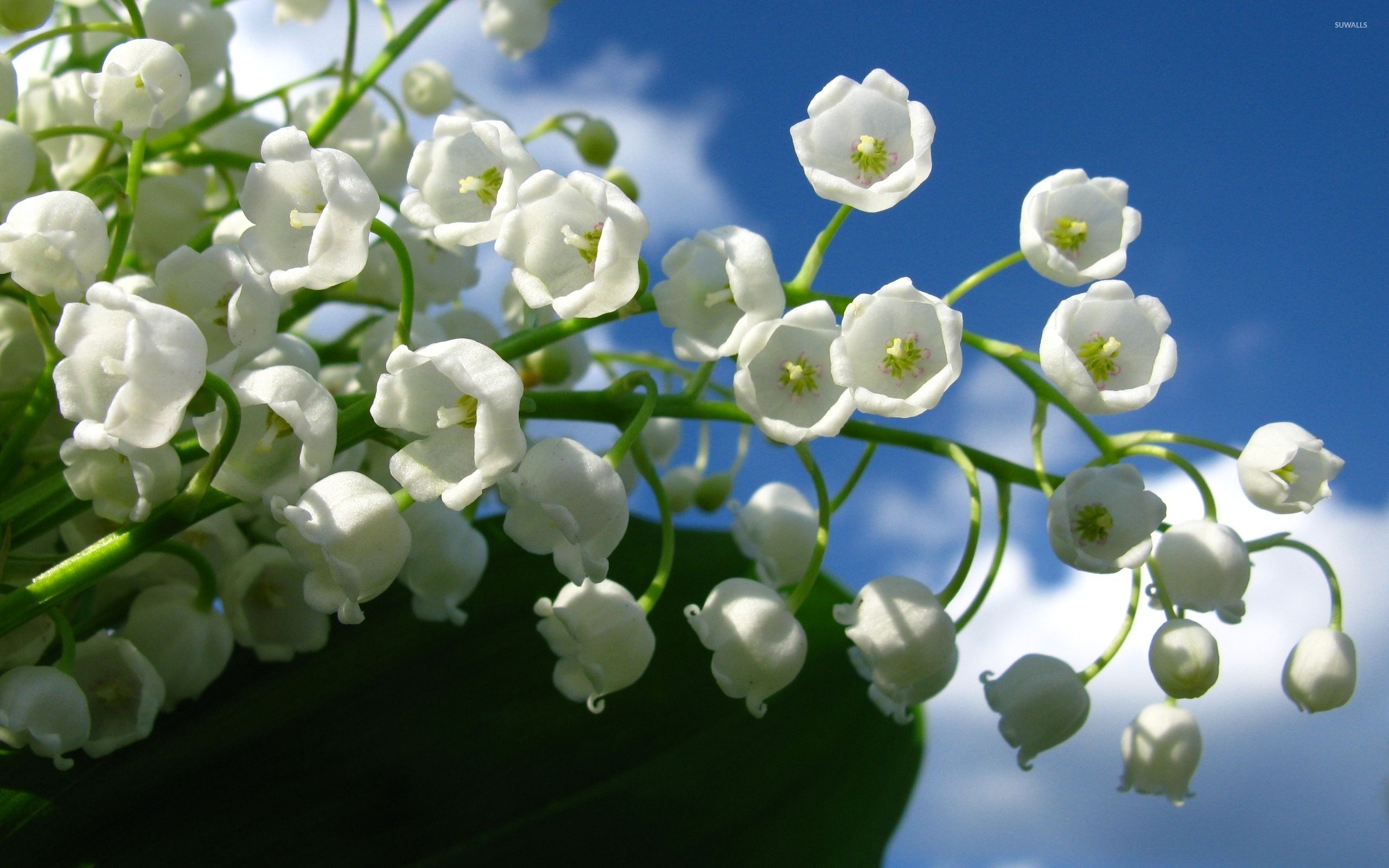 Lily Of The Valley Wallpaper Flower Wallpapers 7459