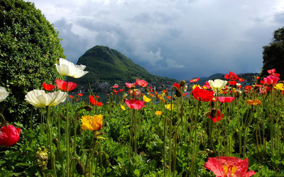 Lovely poppy field by the lake wallpaper