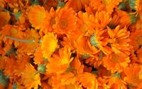 Marigolds [2] wallpaper 1920x1200 jpg