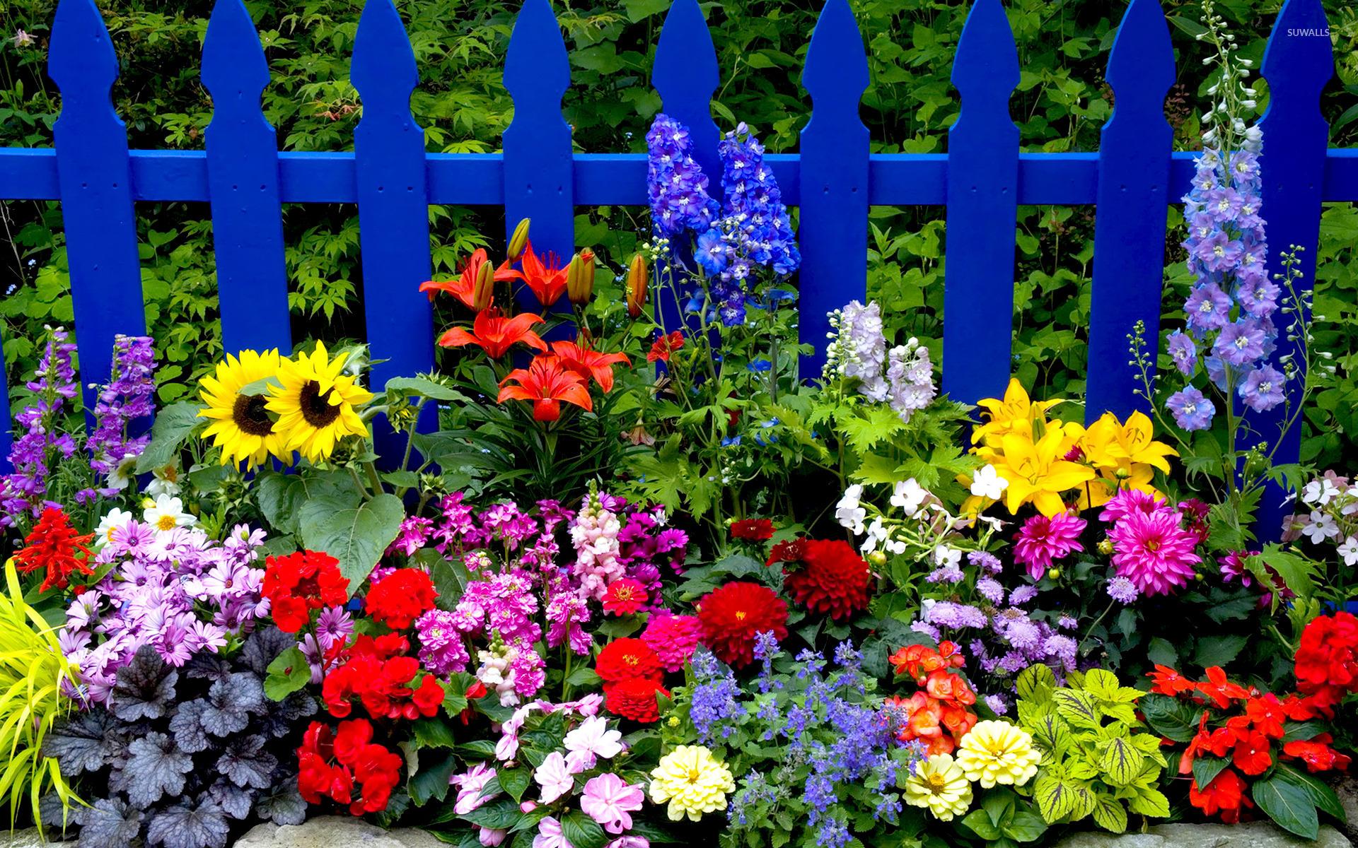 Multicolored summer flowers wallpaper
