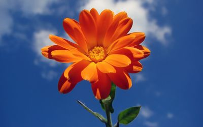 Orange flower in the sky wallpaper