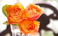 Orange roses [5] wallpaper 1920x1200 jpg
