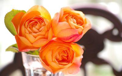 Orange roses [5] wallpaper