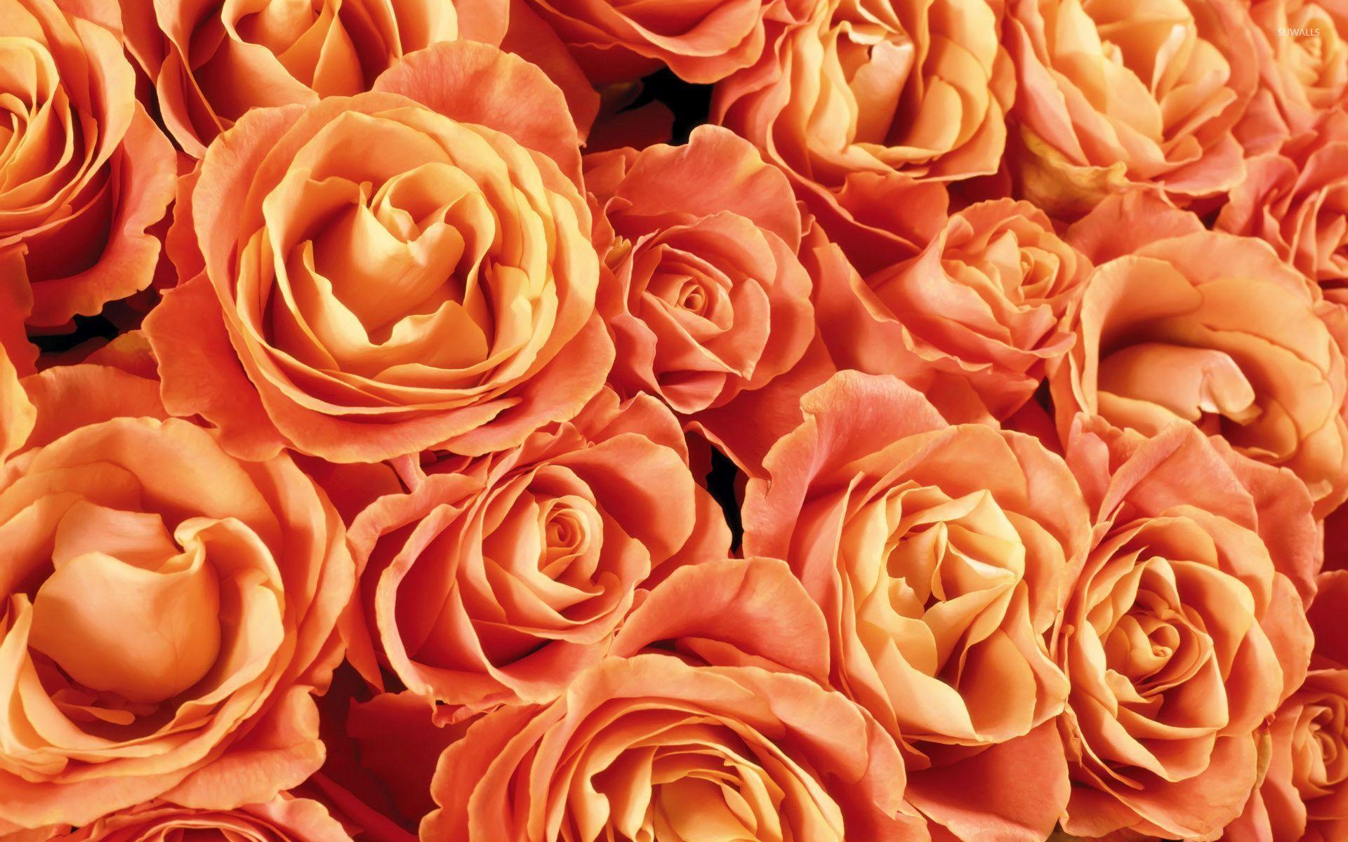 Orange Roses Wallpaper Flower Wallpapers 53987