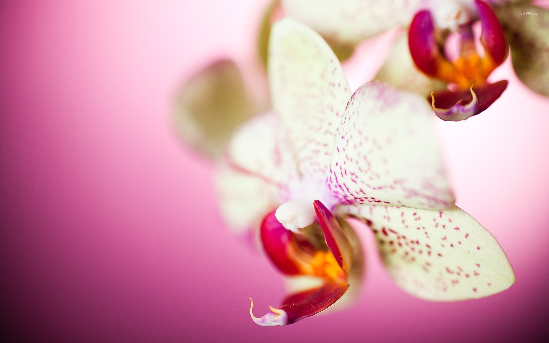 Daily Doodle Orchid Wallpaper By Mynti On Deviantart