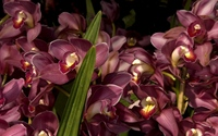 Orchids [12] wallpaper 2560x1600 jpg