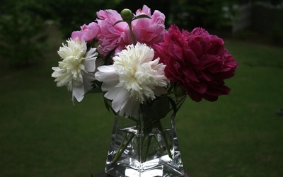 Peonies in a vase wallpaper