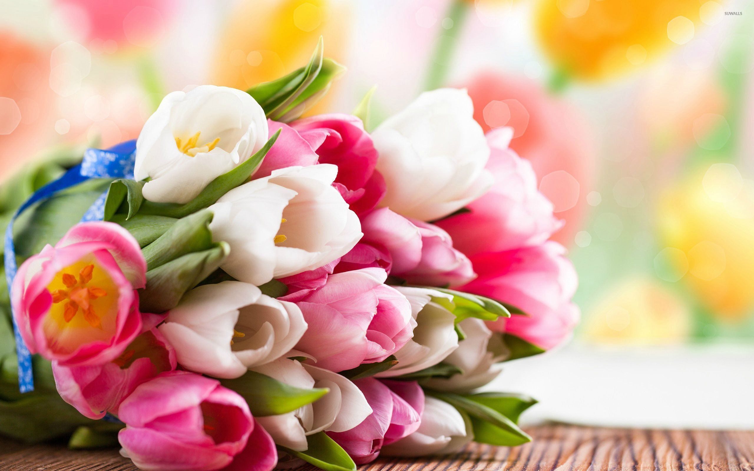 Pink And White Tulips Wallpaper