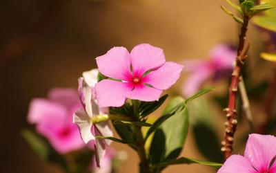 Pink blossom [4] wallpaper