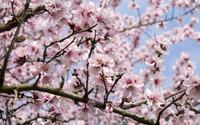 Pink blossoms [16] wallpaper 3840x2160 jpg