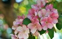 Pink blossoms [19] wallpaper 1920x1080 jpg