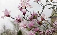 Pink magnolias [3] wallpaper 2880x1800 jpg
