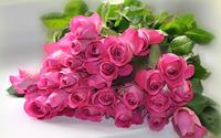Pink roses [2] wallpaper 1920x1200 jpg