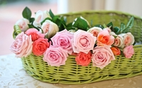 Pink roses in a straw basket wallpaper 1920x1200 jpg