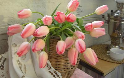 Pink tulips [3] wallpaper