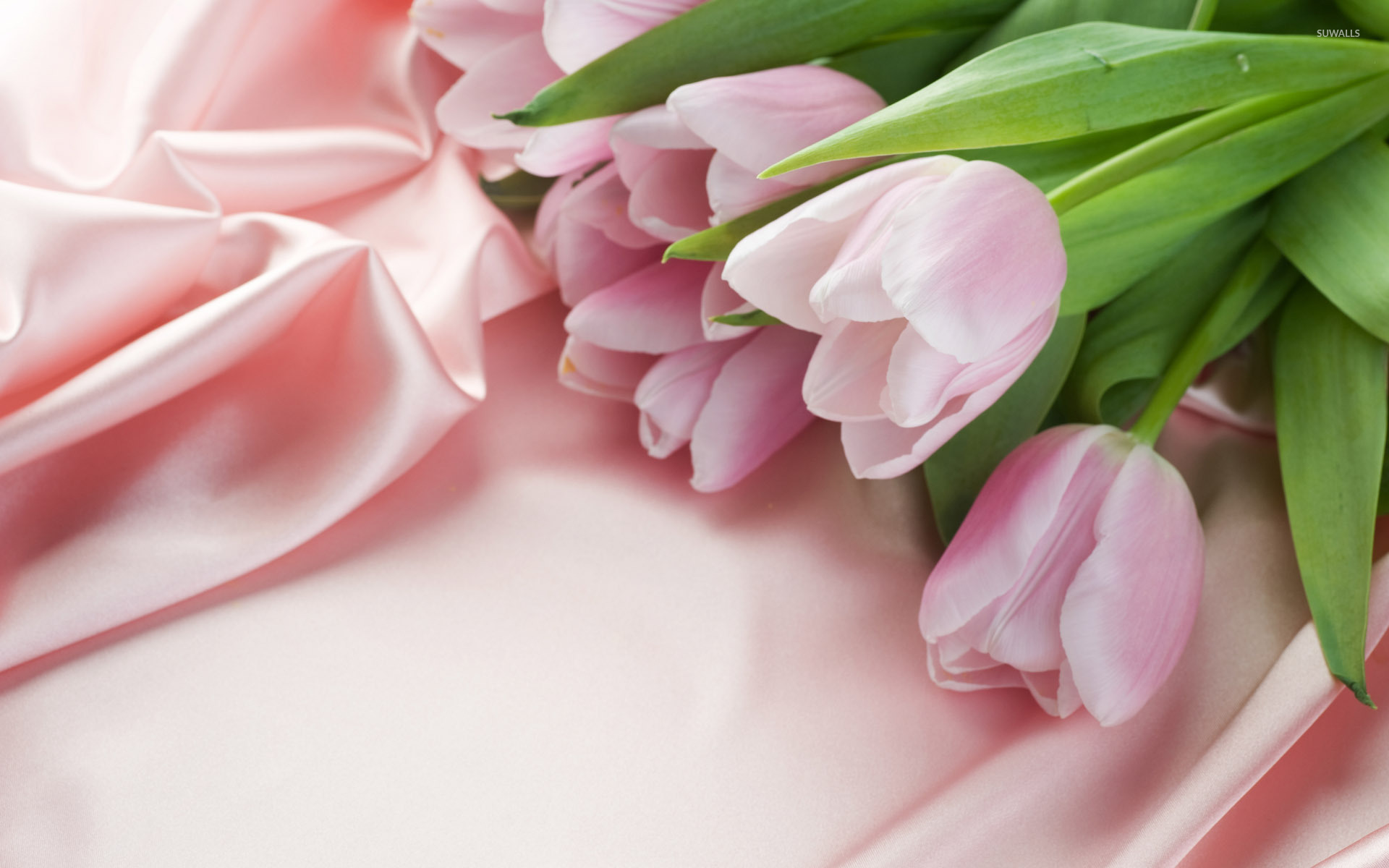 Pink Tulips wallpaper  Flower wallpapers  4633