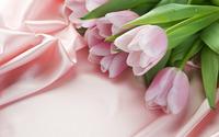 Pink Tulips wallpaper 1920x1200 jpg