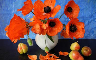Poppy bouquet wallpaper