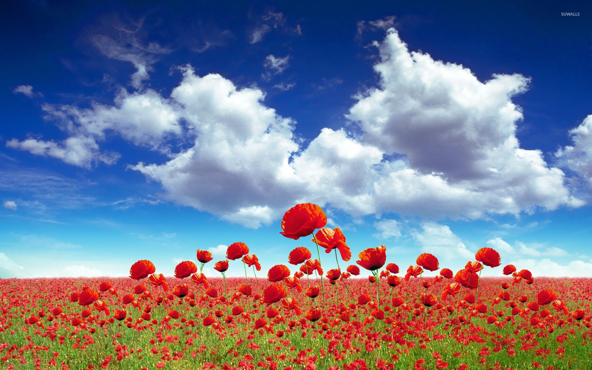 poppy field [2] wallpaper - flower wallpapers - #20134