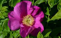 Purple blossom close-up wallpaper 2560x1600 jpg