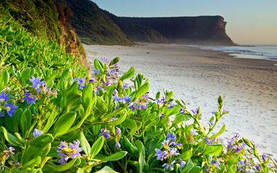 Purple flowers on a sandy beach wallpaper