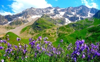 Purple mountain flowers wallpaper 2560x1600 jpg