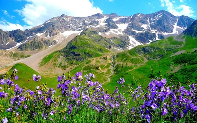Purple mountain flowers wallpaper
